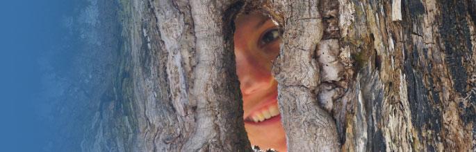 TreeCalc